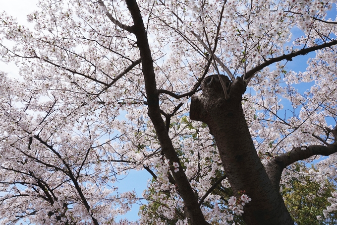 2015 大阪城公園 (4)