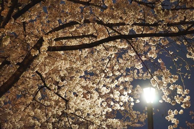 2015 桜の宮 (1)