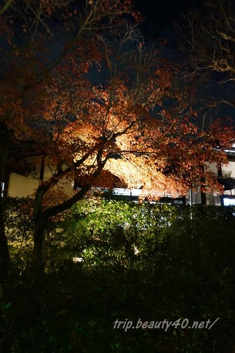 京都 圓徳院ライトアップ (3)2