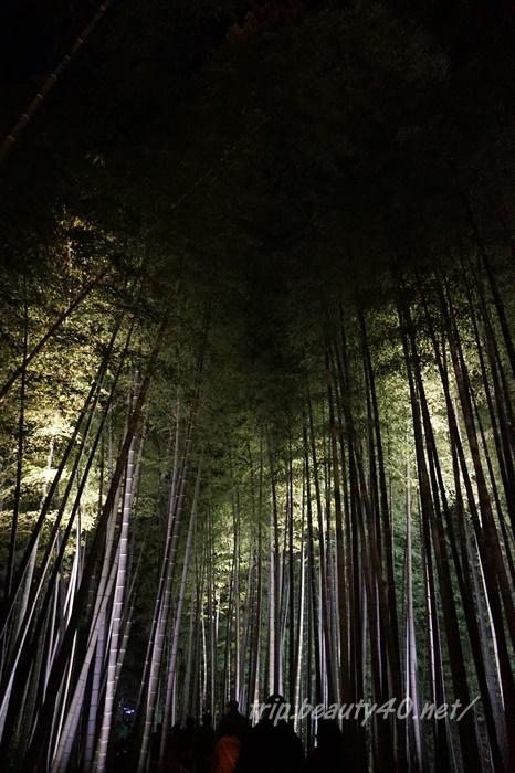 竹きれい 高台寺ライトアップ 京都紅葉 (27)2