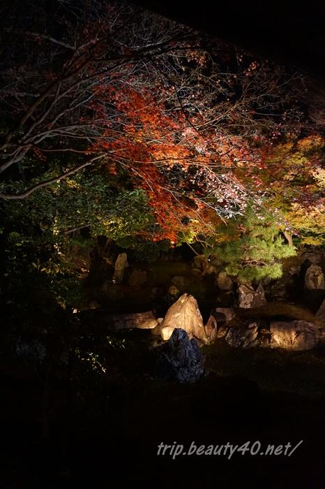 京都 圓徳院ライトアップ (14)2