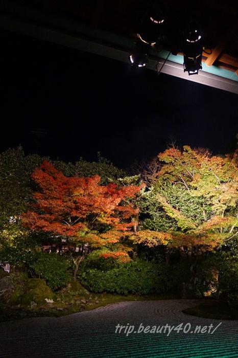 京都 圓徳院ライトアップ (5)2