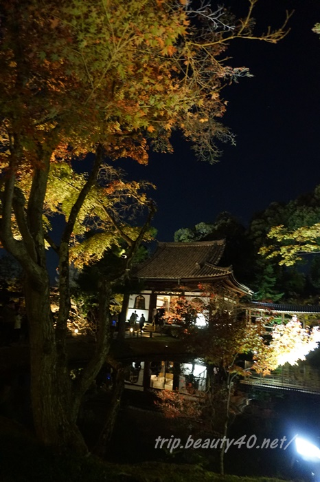 開山堂 高台寺ライトアップ 京都紅葉 (23)2