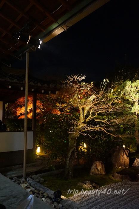 京都 圓徳院ライトアップ (7)2