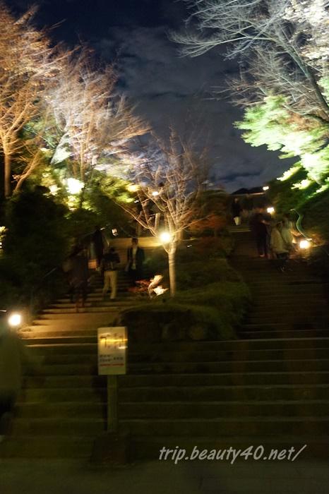 高台寺ライトアップ 京都紅葉 (4)2