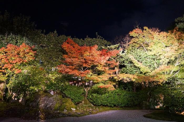 京都 圓徳院ライトアップ (4)2